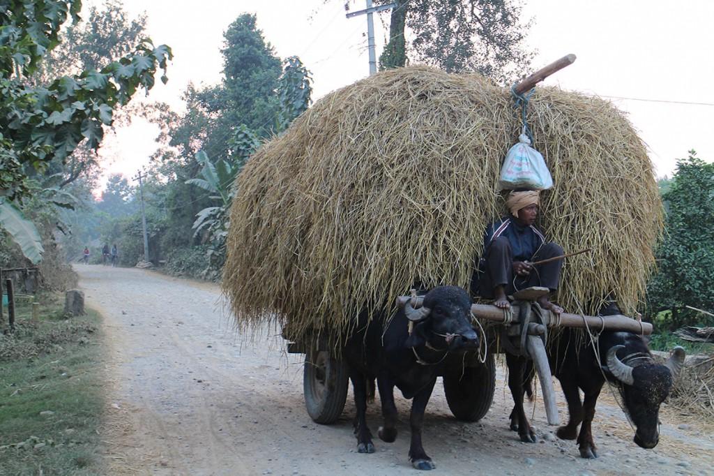 Bonde på väg hem från åkern. En vanlig syn på grusvägarna runt byn Thakurdwara. Foto: Josefine Nilsson