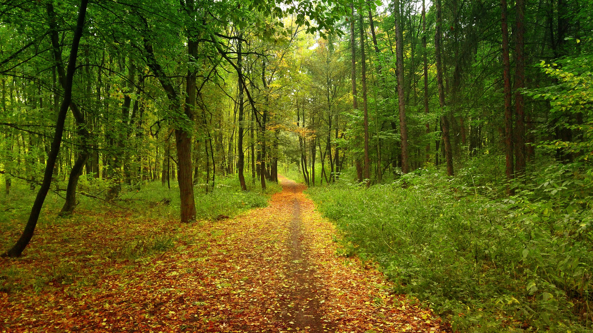 forest-1025570_1920