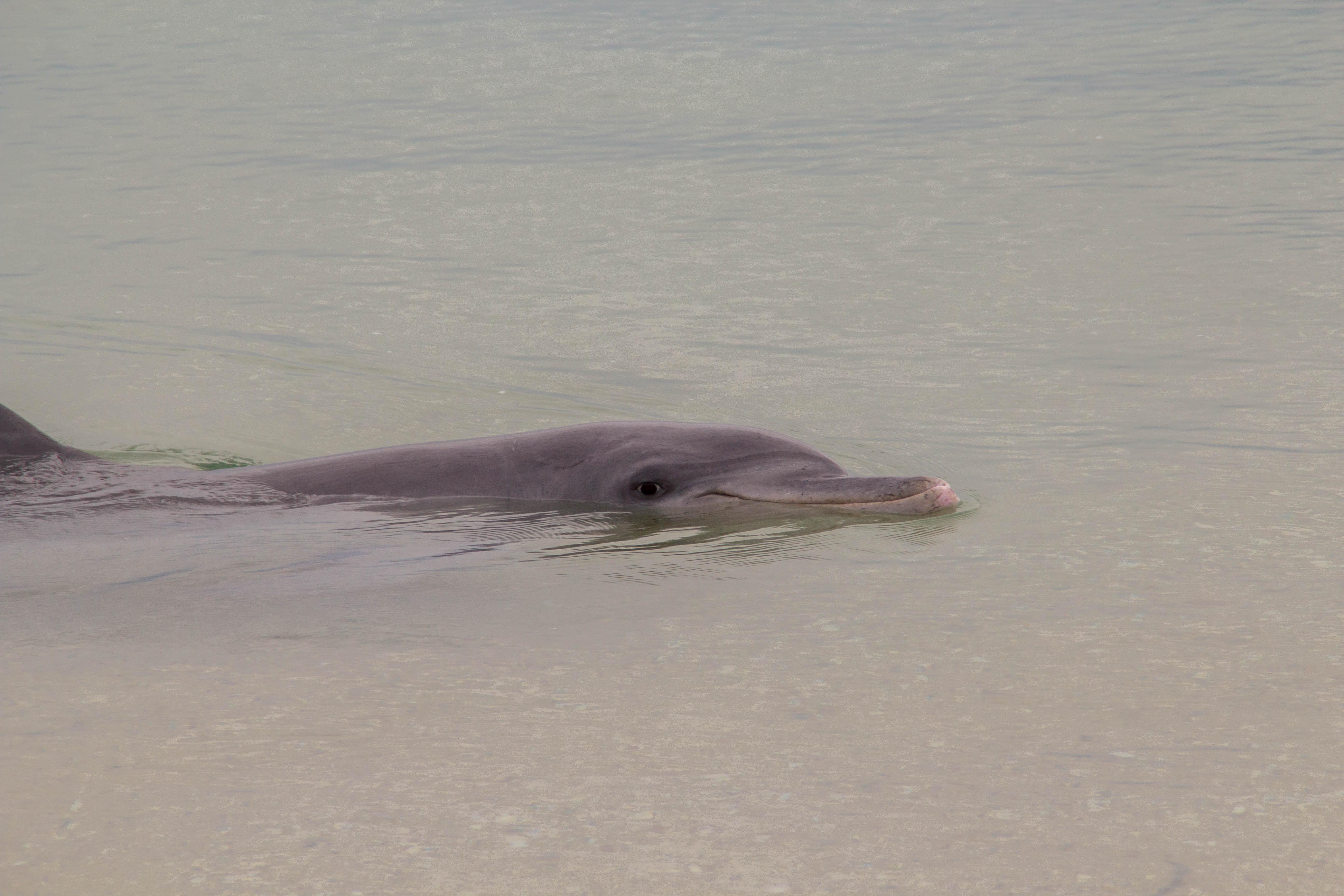 dolphin monkey mia