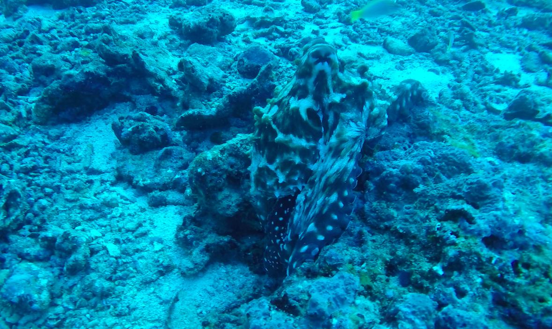 bläckfisk3