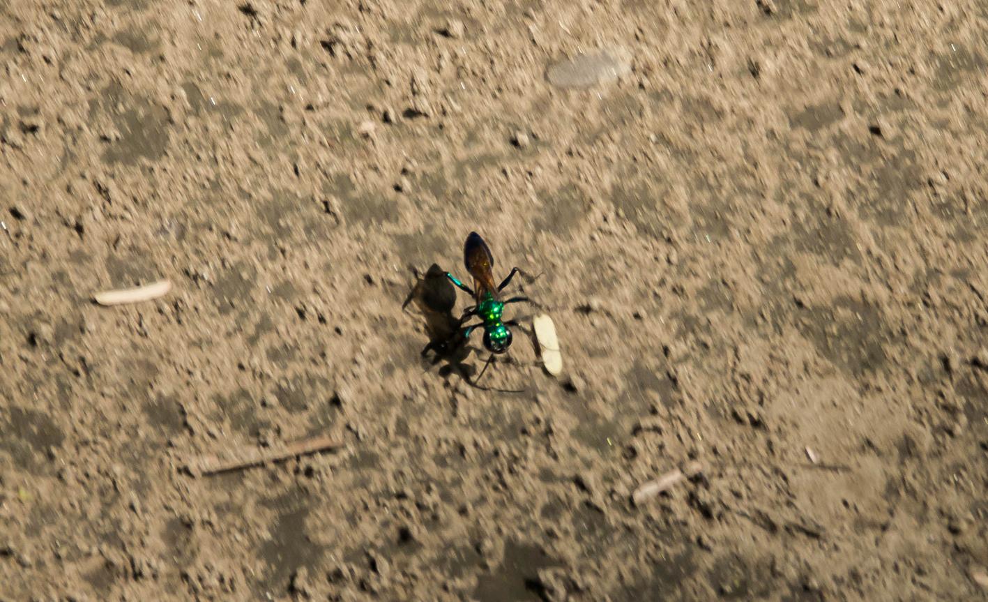 Någon form av myra. Foto: Patrik Enlund
