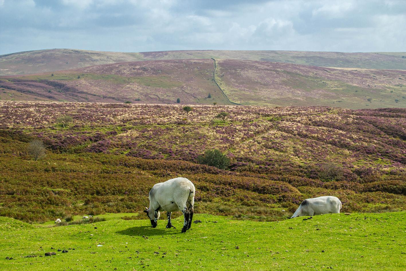 Dartmoor-2