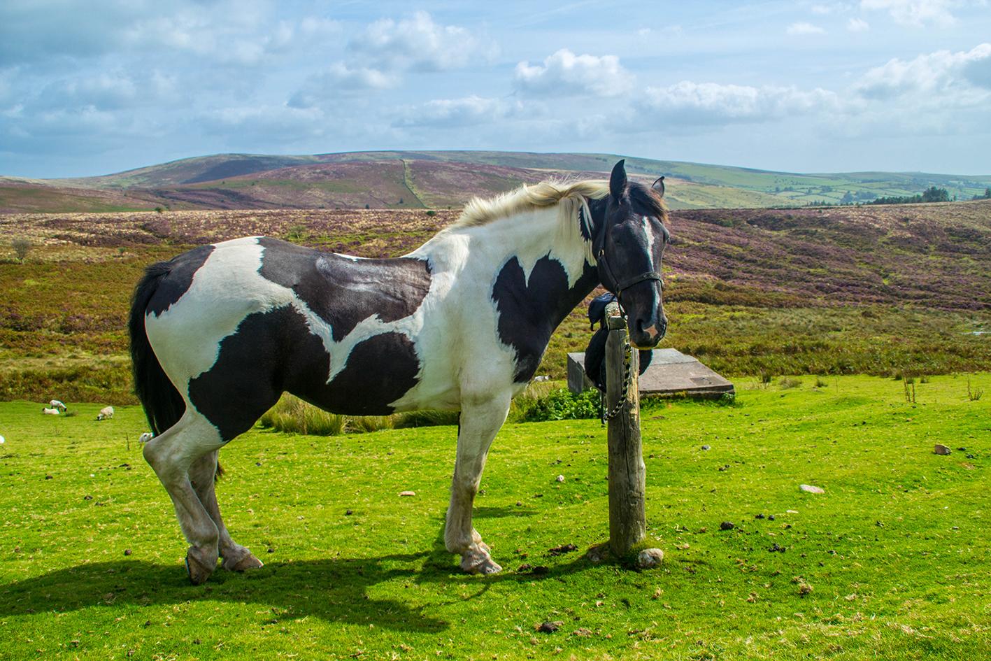 Dartmoor-6