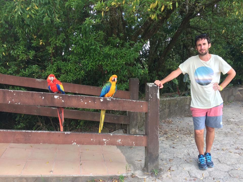 En resa genom Sydamerika bjuder förstås på många färgglada papegojor. Foto: Privat
